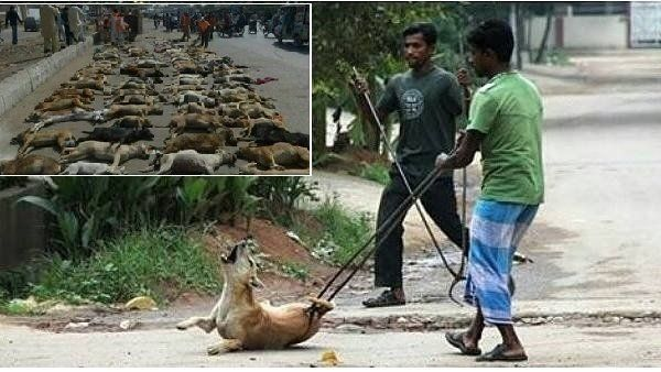 Please sign: STOP THE INHUMANE STRAY DOG CULLING IN INDIA > https://www.change.org/p/animal-welfare-board-of-india-stop-the-inhumane-stray-dog-culling-in-india