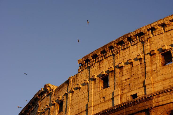 The birds.... Colosseum | Rome | Italy