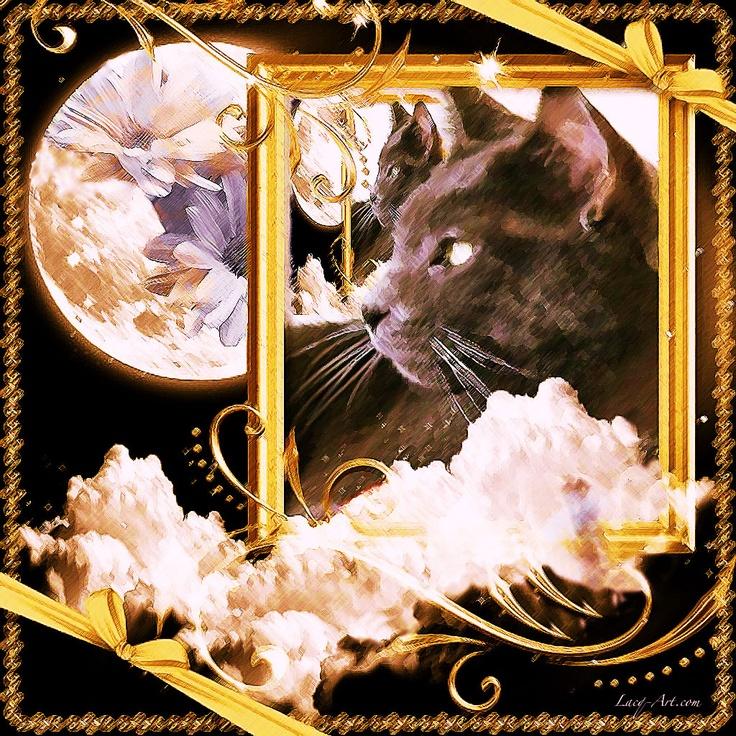 wolf: Cat Cat