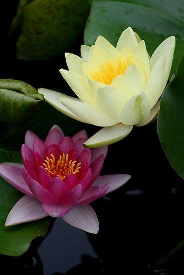 Pretty Flower best 10+ most beautiful flowers ideas on pinterest | glowing