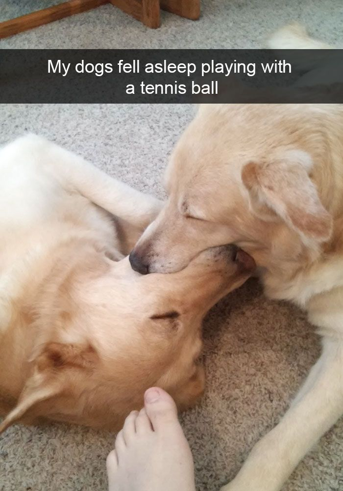 Best Funniest Animal Videos Ideas On Pinterest Funny Photos - The 30 funniest animal snapchats of all time