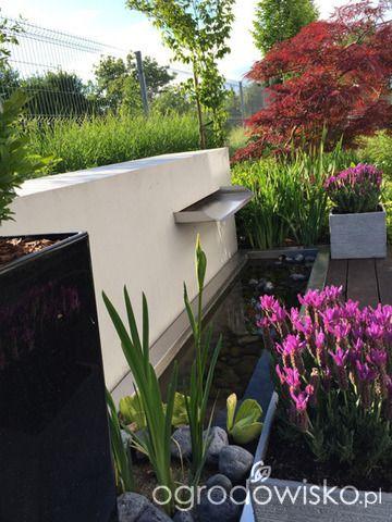 Ogród pod trzema dębami - strona 126 - Forum ogrodnicze - Ogrodowisko