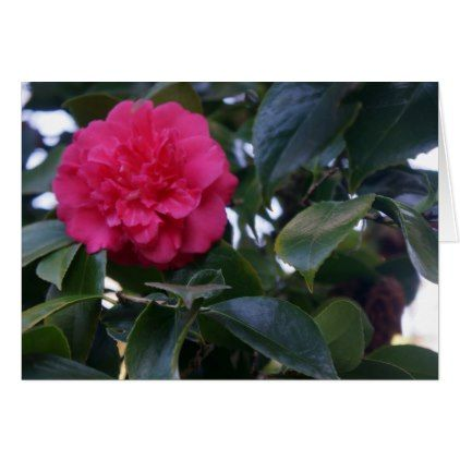 Daikagura Red Camellia Card - flowers floral flower design unique style