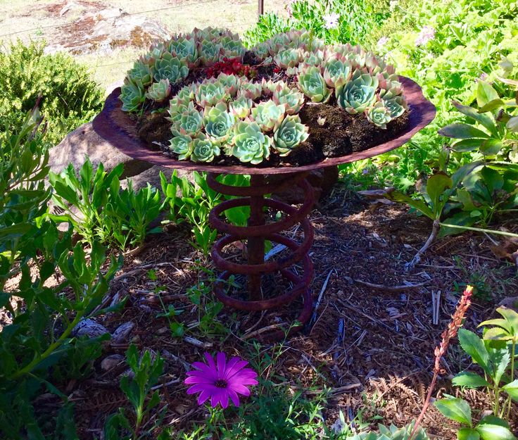 My rusty garden sculpture made from an old plough disc and an old spring. Annie Francis.