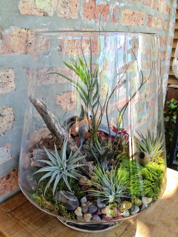 ENDLICH zurück auf Lager!!! Dies ist meine meisten angeheftete Terrarium auf Pinterest. Es ist seit fast einem Jahr nicht verfügbar. Ich habe nur 1 zur Verfügung, so erhalten sie solange du kannst! Dies ist das perfekte Terrarium für diejenigen von uns, kann nicht die grünste Daumen haben wollen aber trotzdem einen lebendige Terrarium (es gibt nichts falsch oder künstliche in diesem Terrarium). Diese großen Terrarium beherbergt eine Vielzahl an Tillandsien in verschiedenen Farben und…