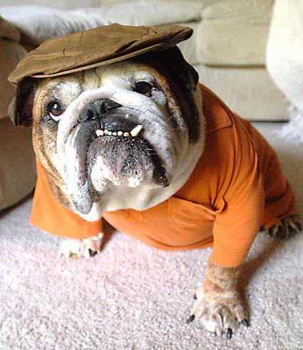 "All around good guy Previous pinner wrote""Baggy Bulldogs...looks like my grandpa. Lol""."
