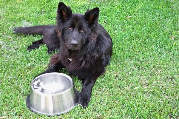 Dog drinking ice water....Is it safe?  Room-temperature water probably the best.