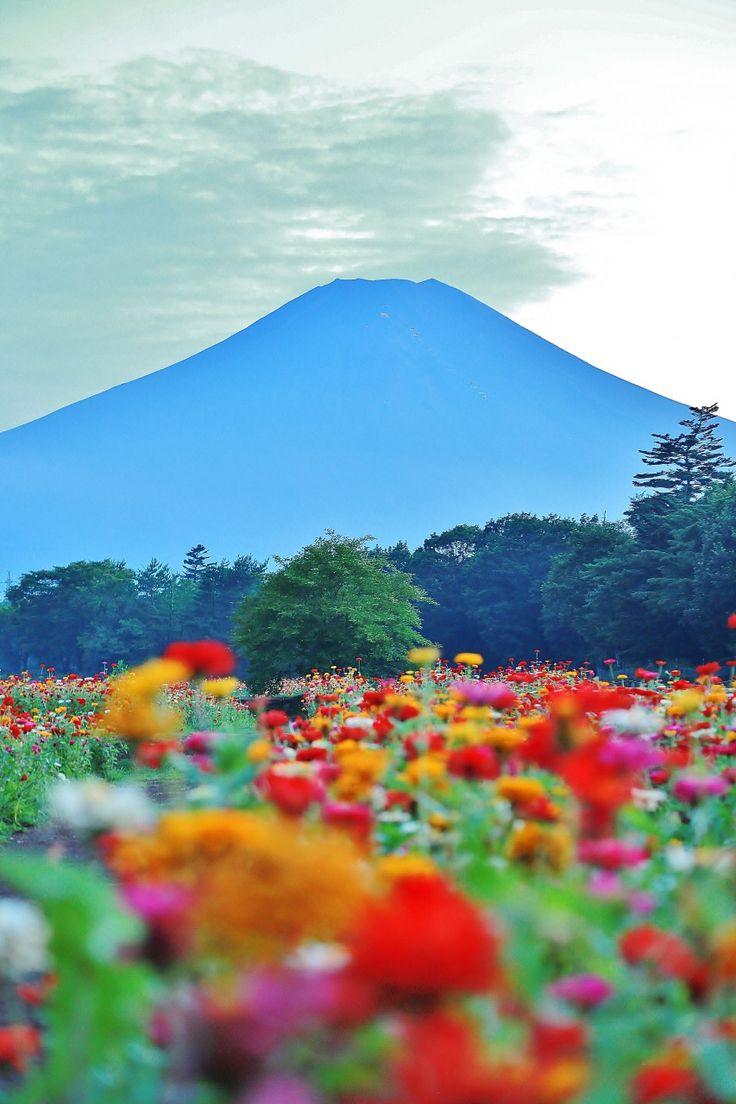 "lensblr-network: "" 富士山とお花畑 Mt. Fuji Yamanashi, Japan photo by tomochael.tumblr.com """
