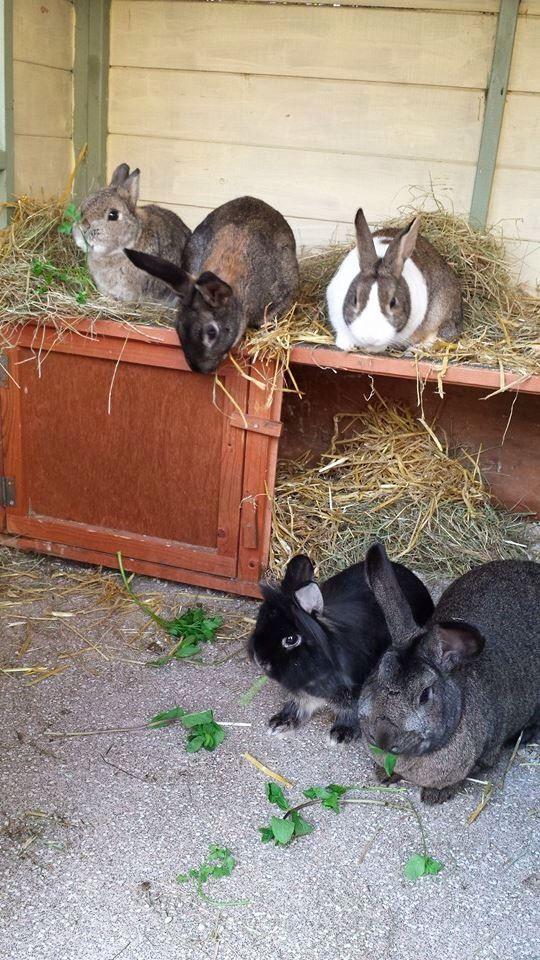 Gus, Jasper, Acorn, Bramble & Pepper from Louisa Collins