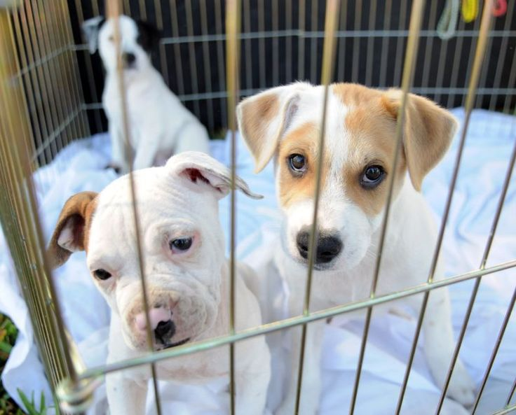 Palm Beach County bans dog, cat sales at new pet stores in effort to clamp down on puppy mills