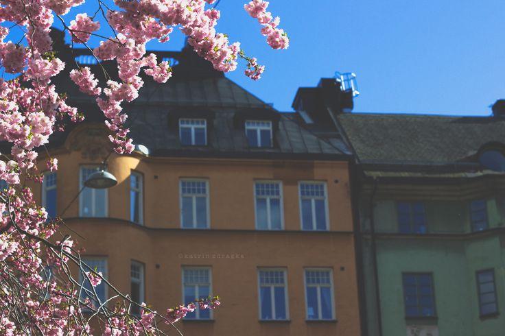Photograph melqvist blossom by katrin zdragka on 500px