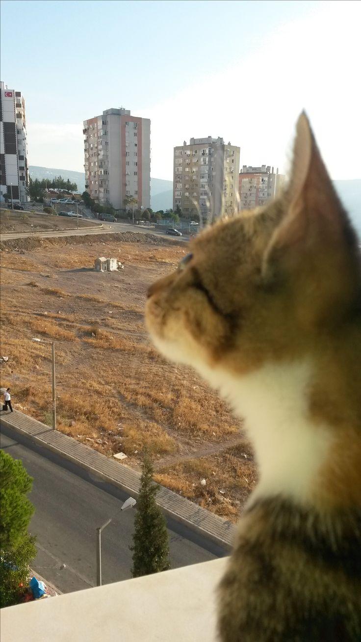Balkon Güzeli Ceviz :)