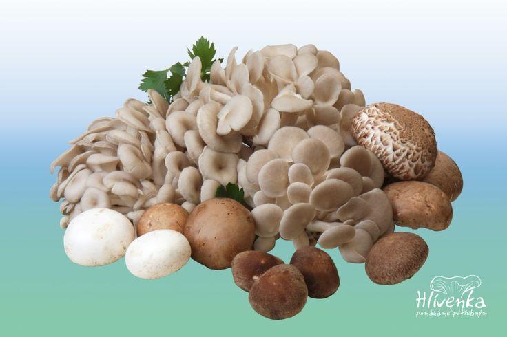 Cerstve houby