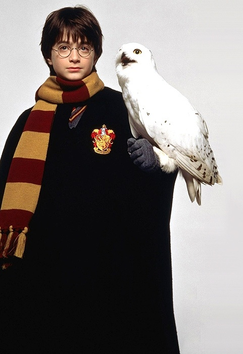 Harry potter 30 day challenge day 10 favorite magical creature hedwig - Chouette hedwige ...