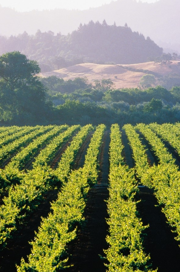 Wine Country Getaway  3-night stay for 2 at The Fairmont San Francisco and 3 nights at The Fairmont Sonoma Mission Inn & Spa. Includes economy airfare and private winery tour.    Enter the Mega Raffle now to win: http://tmcmegaraffle.org/