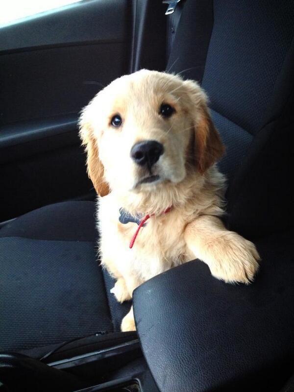 Don't forget my seatbelt! #HappyAlert via @Ashley Walters Walters Walters Walters Walters Yoon Hippo Billy