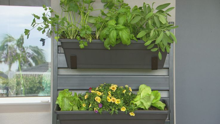 'Practical, beautiful and edible!' See what else Better Homes and Gardens TV DIY presenter, Adam Dovile, loves about vertical gardens: www.bunnings.com.au/alfrescogarden