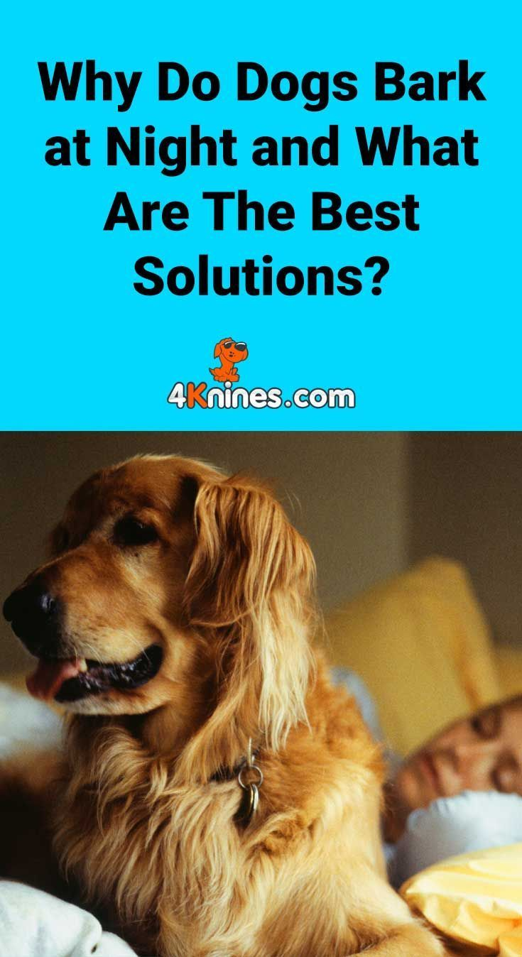 Why Do Dogs Bark At Night And What Are The Best Solutions Dog