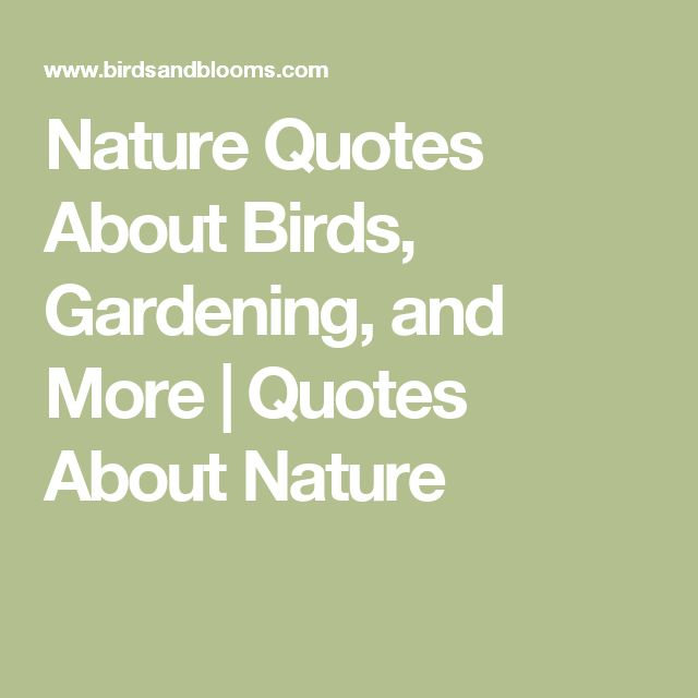 Best Nature Quotes: Best 25+ Quotes About Birds Ideas On Pinterest