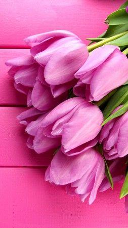 Tulip, 4k, HD wallpaper, spring, flower, pink (vertical