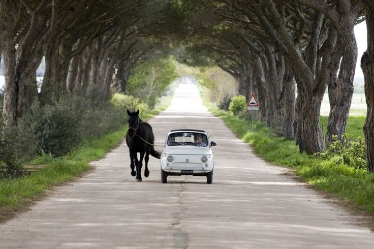Taking the dog.. no pony for a canter #fiat