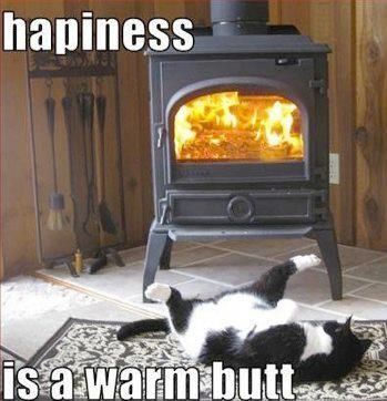 Top 25 Funniest Cat Pics with captions #Funny - Life throws you curves. Being prepared is everything. Are you DrumCorpsReady.com More