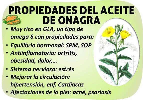aceite de onagra propiedades de su omega y ácidos grasos GLA