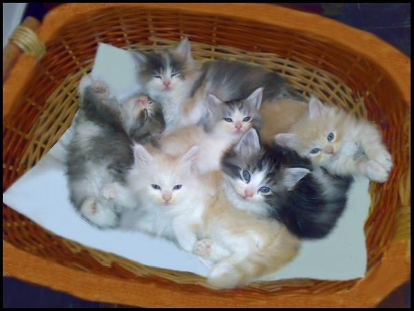 10 gattini, nell'arco di una vita una gatta può avere dai 50 ai 150 figli. Il caso della gatta Kitty, che a 30 anni mise alla luce due gemelli : il 217° e il 218° nato.