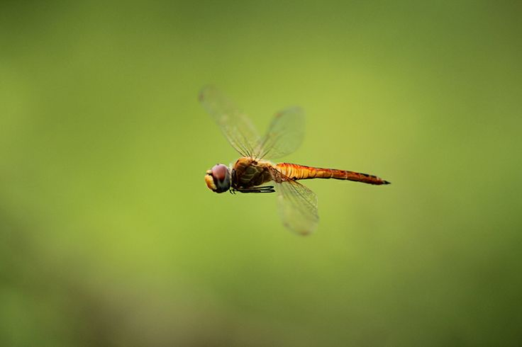 Fly Away My Dragonfly