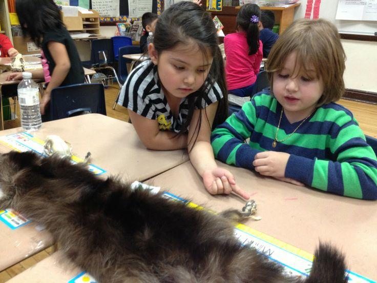 First Grade: Animal Inquiry Unit | school | Pinterest ...