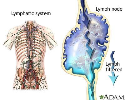 Lymph nodes definition