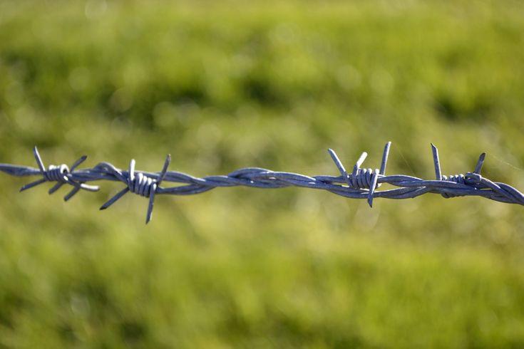 El hijo murio en una alambre y es un simbolo de la muerte y de el peligro de la selva.