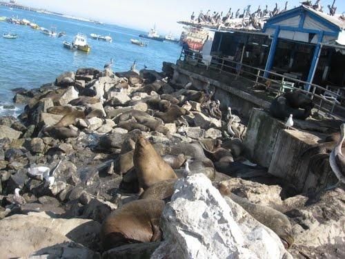 Puerto de San Antonio quinta región Chile
