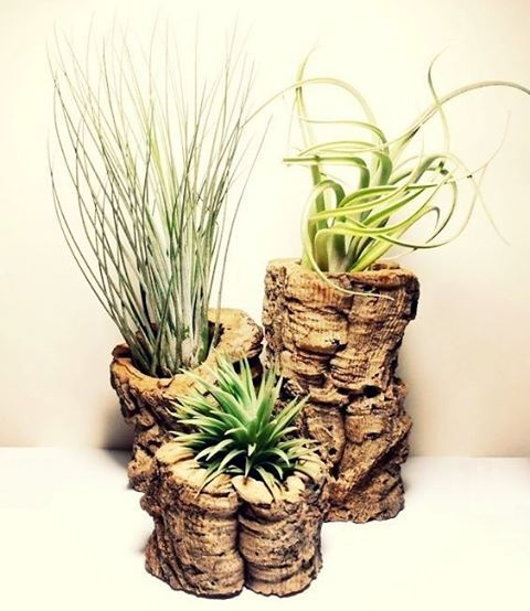 """Our selection of air plants are hand-picked and carefully packaged by our Bloom team to ensure a happy arrival. Never ask the question """"Where to buy Air Plants"""" again! 