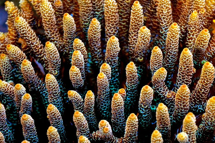Vibrant Coral at low tide - Hydeaway Bay in the Whitsundays - the heart of the Great Barrier Reef