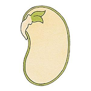 Pour préparer la réalisation d'un potager dans l'école, ma collègue de CM et moi avons conçu une double séquence pour nos élèves du CE1 au CM2 : Les végétaux, de la germination à la croissance. La première partie porte sur la graine (de haricot dans notre cas) : Qu'est-ce qu'une graine ? Quelles sont les […]