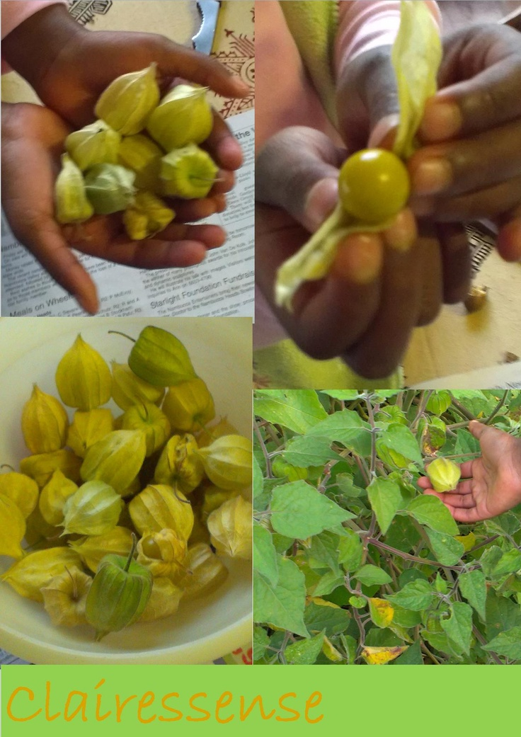 chinese gooseberries so delicious and full of natural health
