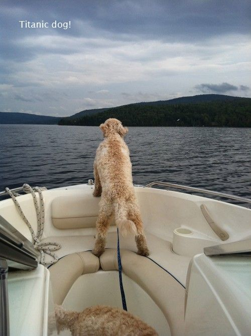 The Titanic Dog. Cute!