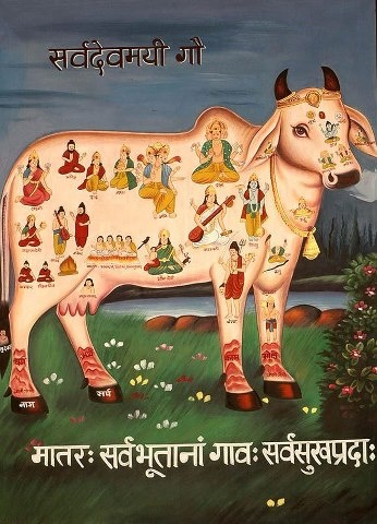 all Devas living in the cow's body.