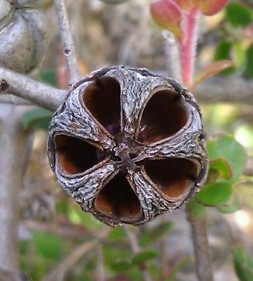 Seed Pods by Sharon Richardson