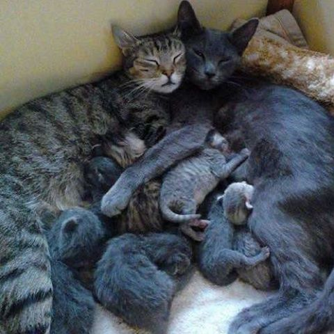 Family cuddle time...