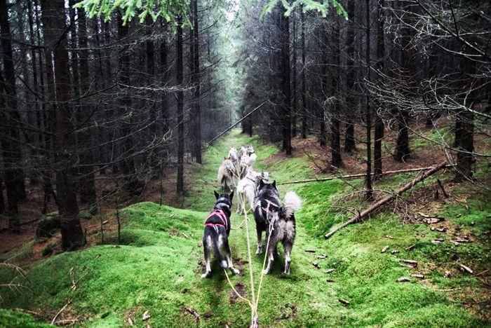 Mit den Huskys durch den Thüringer Wald #iSensoric #LifeLessOrdinary