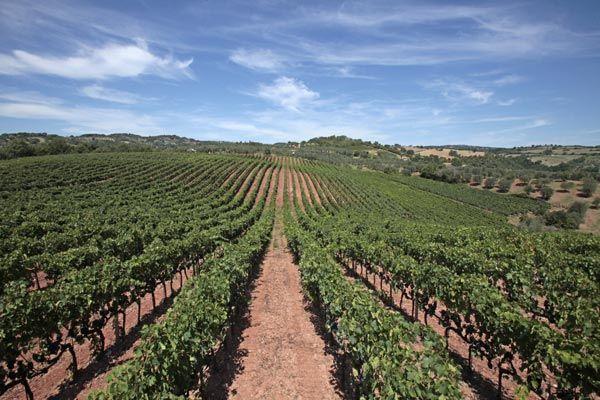 Il fascino del Morellino di Scansano - Vini di Sardegna e Cantine - Le Strade del Vino