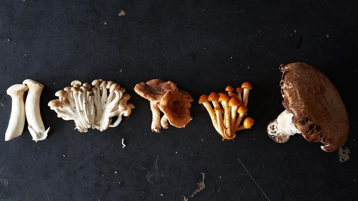 The beginner's guide to mushroom hunting -- because every fungi forager has to start somewhere.
