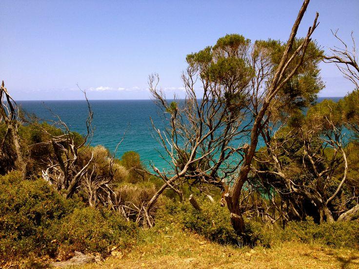 Merimbula beach from the campsite <3