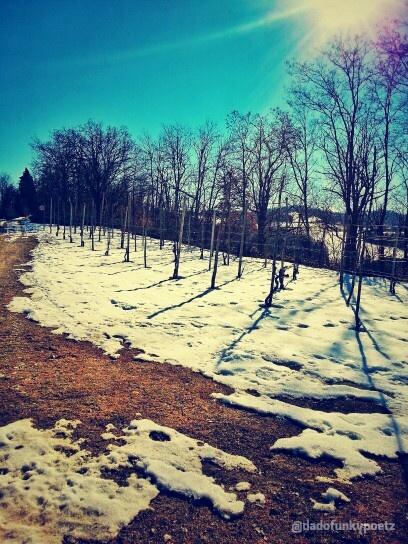 Val d'Arda, #Piacenza #Emiliaromagna #Italia. #colline #hills #neve #snow #sole #sun #alberi #trees #natura #nature