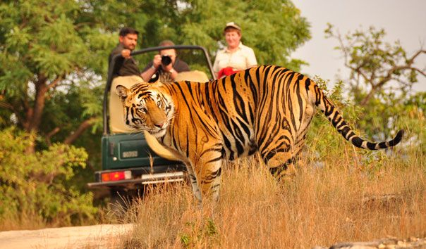 Witness the Exotic Wild Life in India