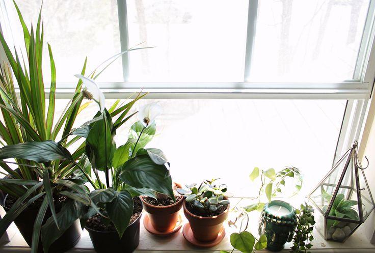 103 Best Window Gardens Images On Pinterest Indoor House