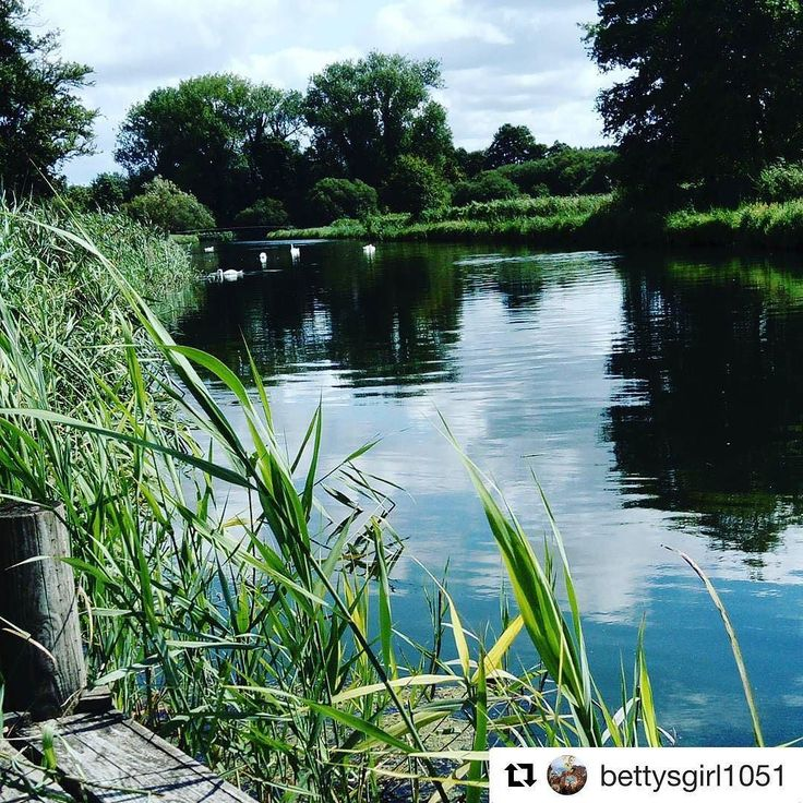 Hope you enjoyed your visit @bettysgirl1051 #repost  Lazy stroll by the River Test. #rivertest #houghtonlodgegardens #beautifulbritain #hampshire_photos #lazydays