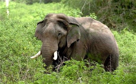 #Elephant in #Bharatpur #National #Park. http://www.bharatpurbirdsanctuary.in/